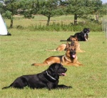 Konkurrence hunde